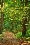 Lush forest in springtime