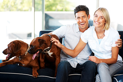 Buy stock photo Portrait of a smiling young couple sitting on sofa with their dogs at home - Indoor. Rhodesian ridgeback and Boxer