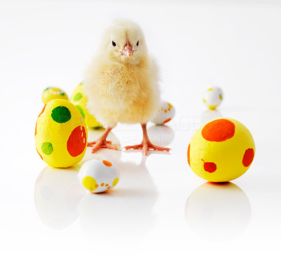 Buy stock photo Little chicken surrounded by colored easter eggs isolated on white background