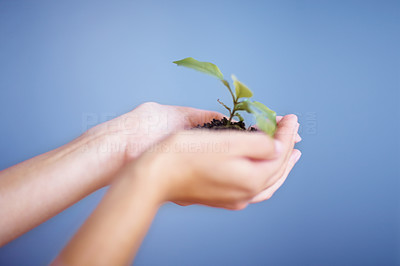 Buy stock photo Cropped image of woman's hands holding young plant on blue background