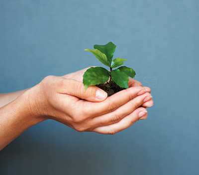 Buy stock photo Closeup of human hands holding plant