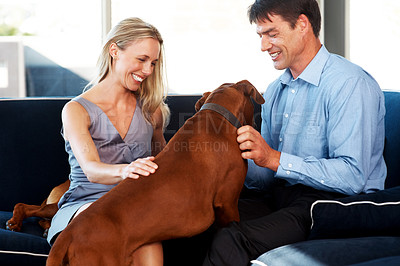 Buy stock photo Portrait of a happy young couple playing with pet dog at home - Indoor. Rhodesian ridgeback