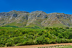 Home of South African wine