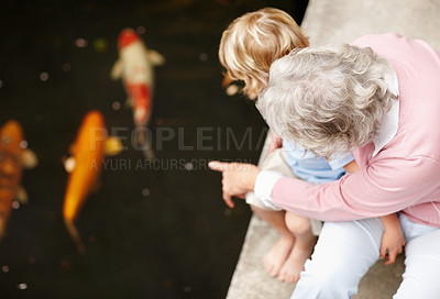 Buy stock photo A senior woman pointing out some fish to her grandson