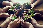 Growing a greener tomorrow together