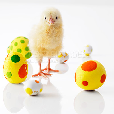 Buy stock photo Tiny chick surrounded by colored easter eggs isolated on white background