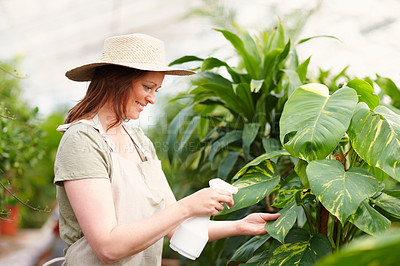Buy stock photo Happy young woman wearing a hat watering plants, outdoors