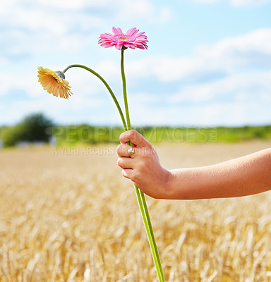 Buy stock photo Woman's hand holding two flowers in front of a country side view - copyspace