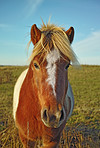 A photo of horse in natural setting