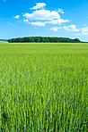 A landscape photo of a green field and blue sky