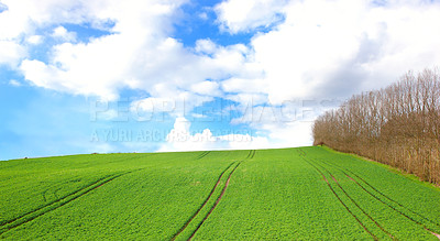 Green field and trees with blue sky and clouds in early spring