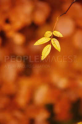 Buy stock photo A  photo of autumn colors in nature
