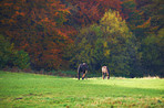 Horses in an autumn meadow
