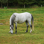 Equine beauty in the green pasture