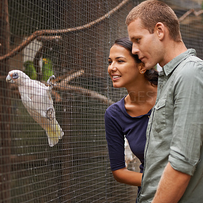 Buy stock photo Shot of a young couple admiring a bird display