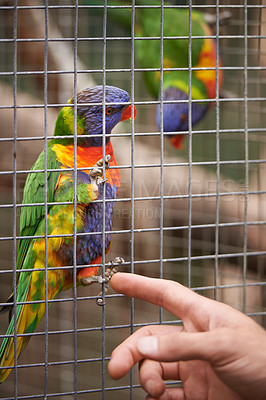 Buy stock photo A parrot sitting in it's cage