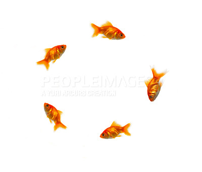 Buy stock photo Circle of goldfish
