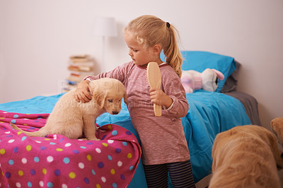 Buy stock photo A cropped shot of a little girl brushing her puppy while it sits on her bed