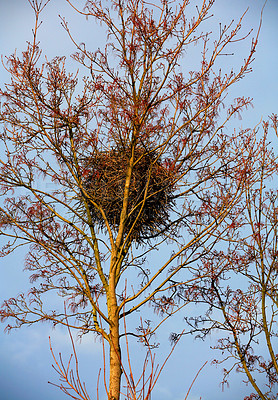 Buy stock photo A shot of a bird's nest high up in the branches of a tree