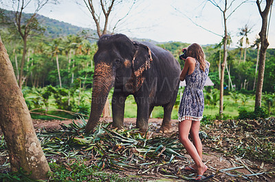 Buy stock photo Shot of a young tourist admiring an elephant in the jungle