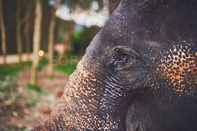 Buy stock photo Close up shot of an elephant standing in the jungle