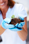 Woman hand holding a small growing green plant