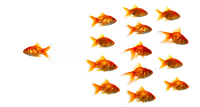 Buy stock photo High resolution image of bored goldfish. Due to the shear size of the shark that was supposed to be in this pictures, we had to live it out. This pictures is great for symbolising anything where anyone stands out from the crowd.