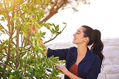 Buy stock photo Shot of a young woman inspecting the leaves on her tree