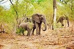 Elephants have deep family bonds