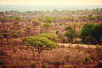 The African bush