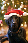 Even dogs love christmas