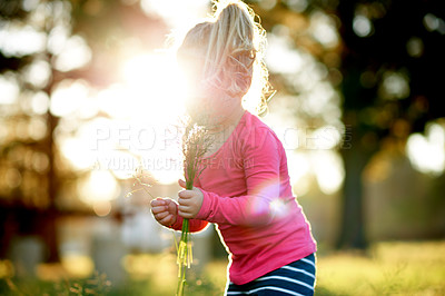 Buy stock photo Shot of an adorable little girl picking flowers in a field of grass