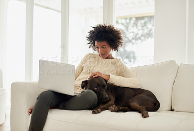 Buy stock photo Shot of an attractive young woman petting her dog while using her laptop on the sofa at home
