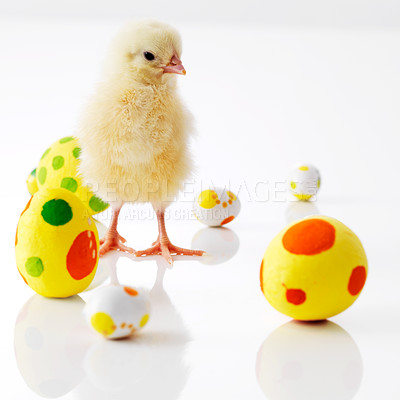 Buy stock photo Image of small chick with easter eggs isolated on white background