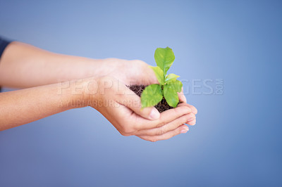 Buy stock photo Woman's hands holding green plant on blue background