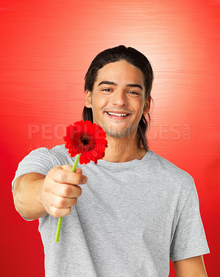 Buy stock photo Portrait of attractive man holding out daisy on red background