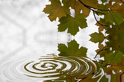 Buy stock photo Serene image of rippling water on a still lake with leaves