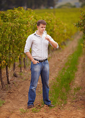 Buy stock photo A young wine maker standing in the vineyard with a glass of his white wine