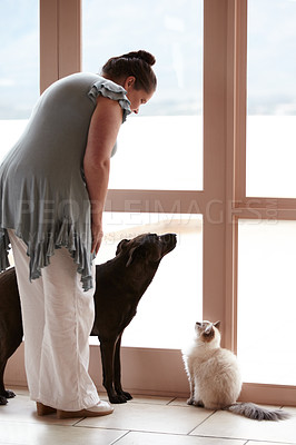 Buy stock photo A woman standing at a window with her pet dog and cat