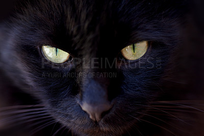 Buy stock photo Cropped view of a black cat looking at you