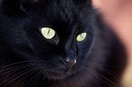 Just a black cat