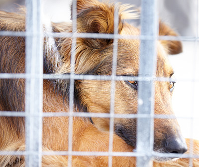 Buy stock photo A dog confined in a cage at the pound