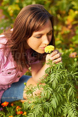 Buy stock photo Cropped shot of a woman smelling a yellow flower