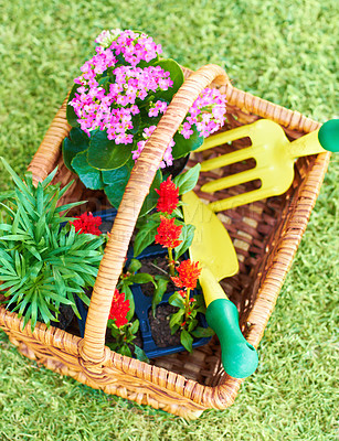 Buy stock photo Closeup shot of a garden basket full of flowers for planting