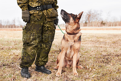 Buy stock photo An alsatian looking up at his soldier trainer