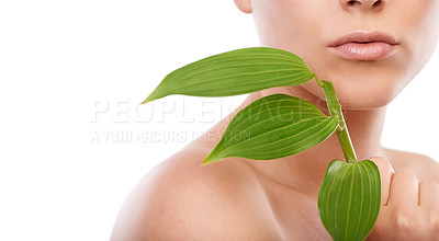 Buy stock photo A cropped image of a woman holding green leaves up to her face