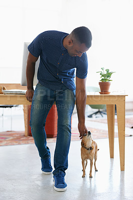 Buy stock photo A young businessman petting a small dog