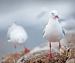 A photo of sea gulls