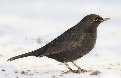 Buy stock photo Shot of a single bird outdoors