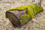 Moss-covered log